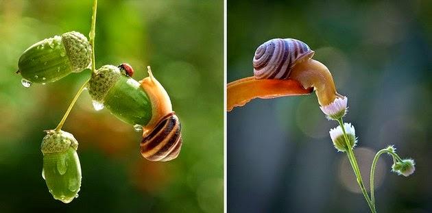 snail-macro-photography-vyacheslav-mishchenko-4