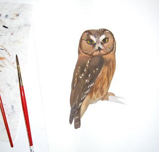 audubon bird guide first edition