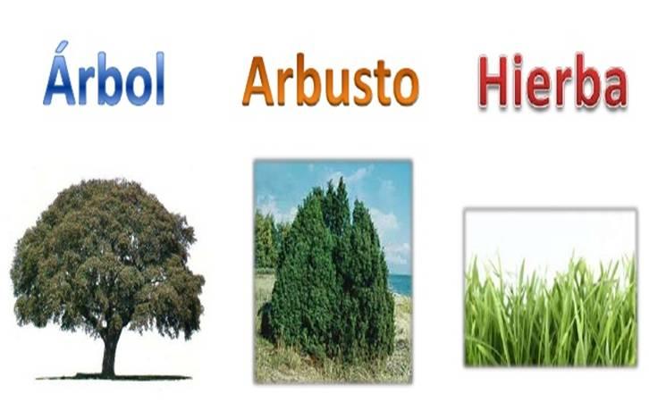Reino de las plantas con ciencia - Arboles y arbustos ...