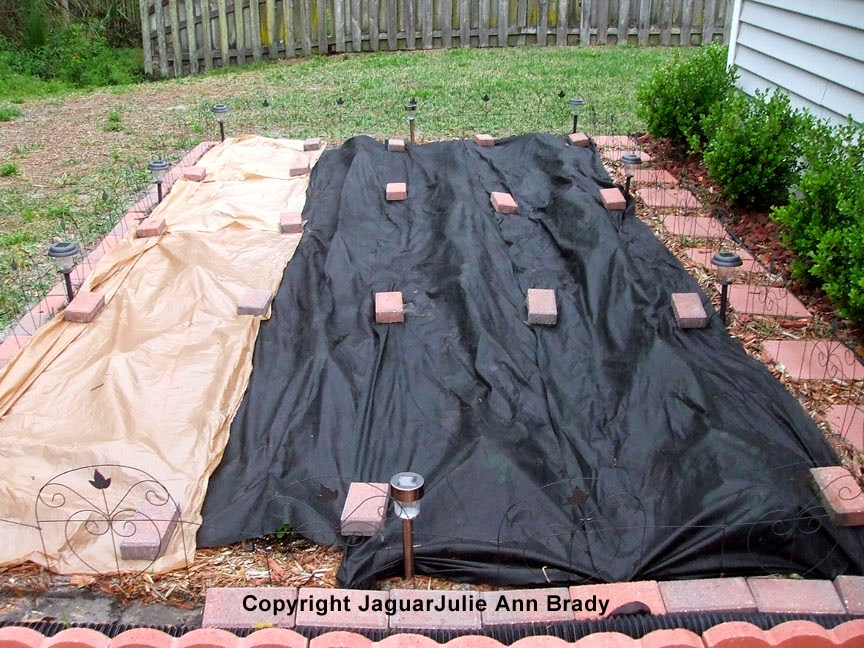 Lowe's Liners and Weed Barrier Cloth Protecting Sunflower Seedlings ~ JaguarJulie