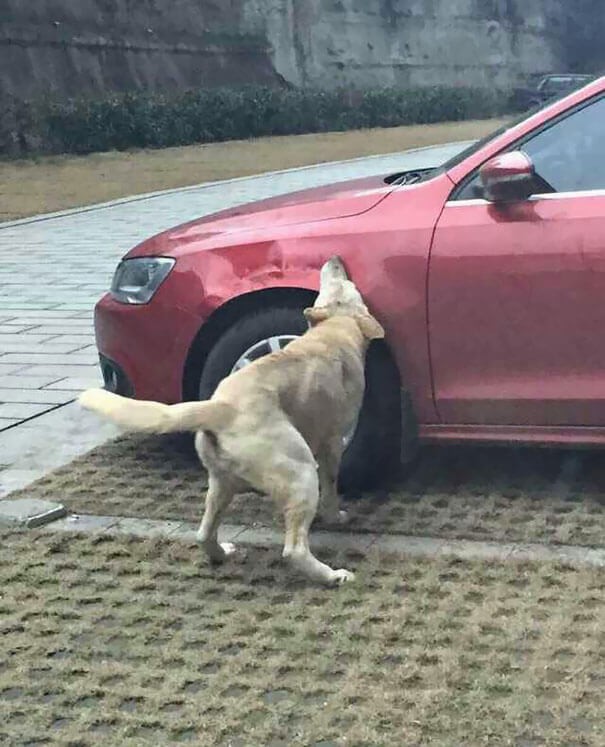 Man Kicks A Dog. Dog Comes Back With Friends And Destroys His Car While He's Away