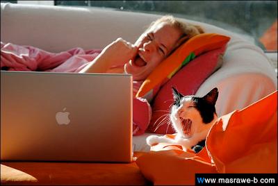 صور صور قطط كيوت 2020 خلفيات قطط جميلة جدا cats50.png