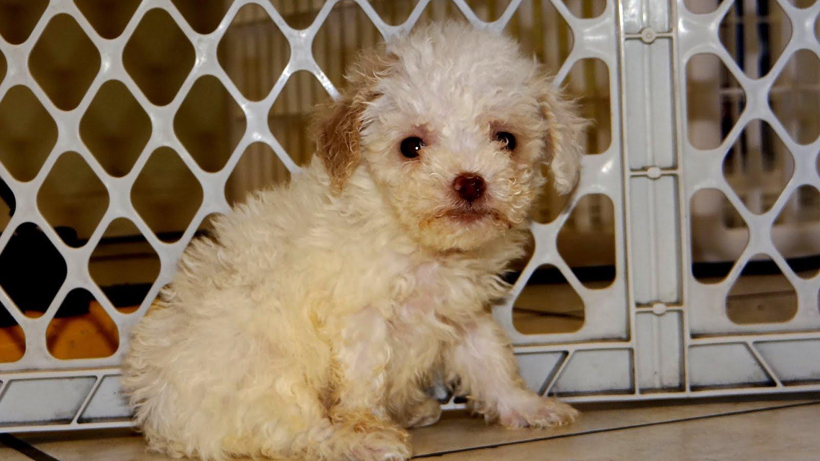 Craigslist San Antonio Pets For Sale - Pet choices