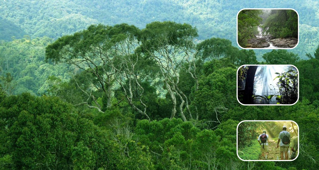 Keanekaragaman Hayati Generasi Biologi