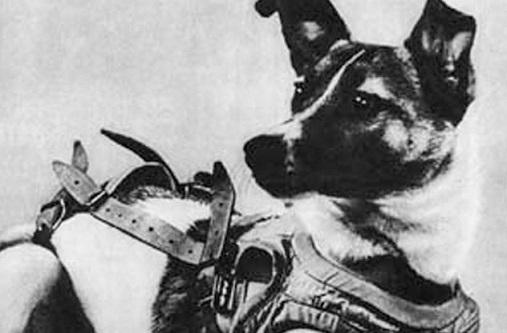 Uzaydaki İlk Köpek Laika (Layka) Hakkında Trajik Gerçekler