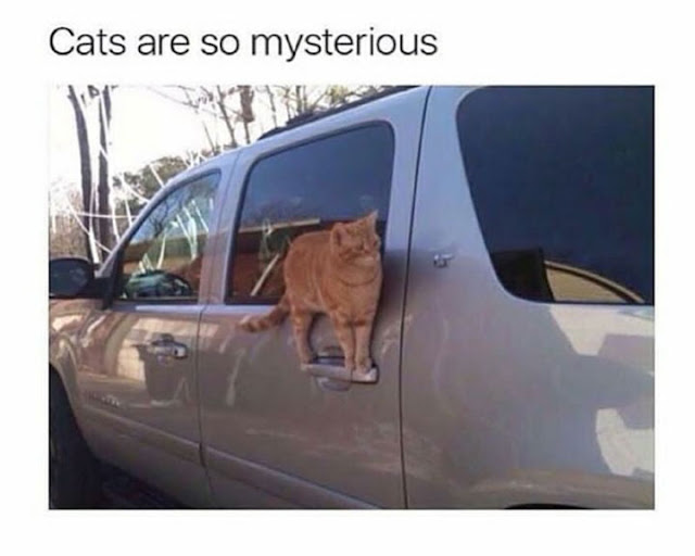 33 Randomly Choose Funny Memes Pictures Of The Day