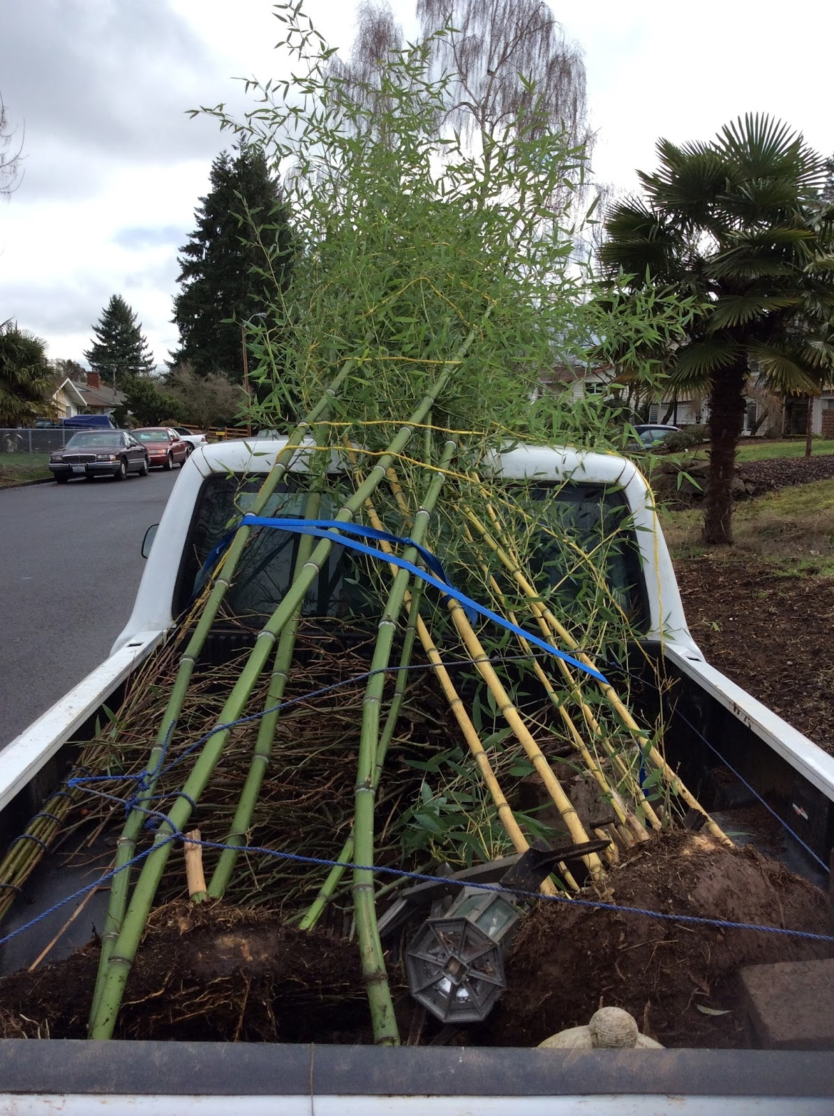 Growing Greener In The Pacific Northwest Propagating And