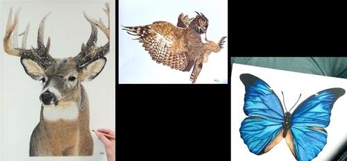 00-Shannon-Mayhew-Drawings-by-Domestic-and-wildlife-Animal-Artist-www-designstack-co