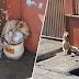 Anjing Malang Setiap Hari Di Rantai Hingga Tidak mampu Duduk