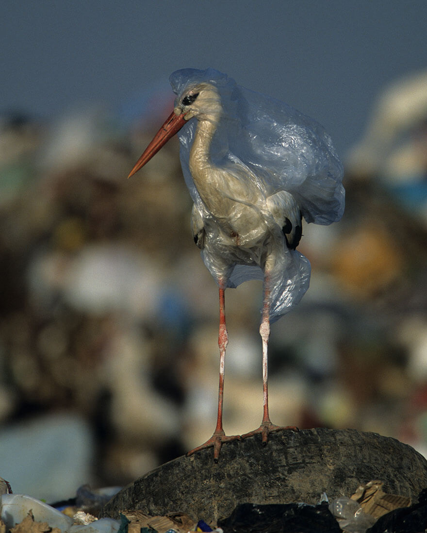 A Striking National Geographic Campaign Uses Shocking Pictures To Raise Awareness About Inconsiderate Usage Of Plastic