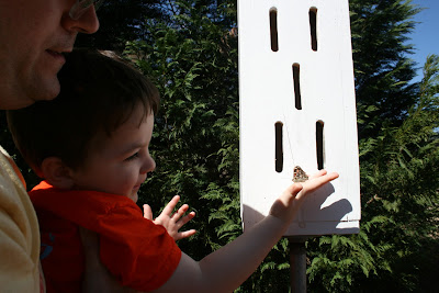 nature study, butterfly unit, toddler homeschool, butterfly house