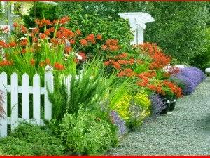 cara membuat taman cantik di depan rumah | tips membuat