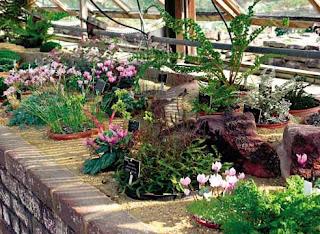 Palánták és virágok a teraszon.