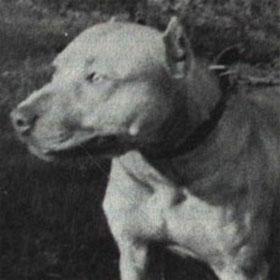 INDIAN BOLIO ROM | SPORTING DOG NEWS