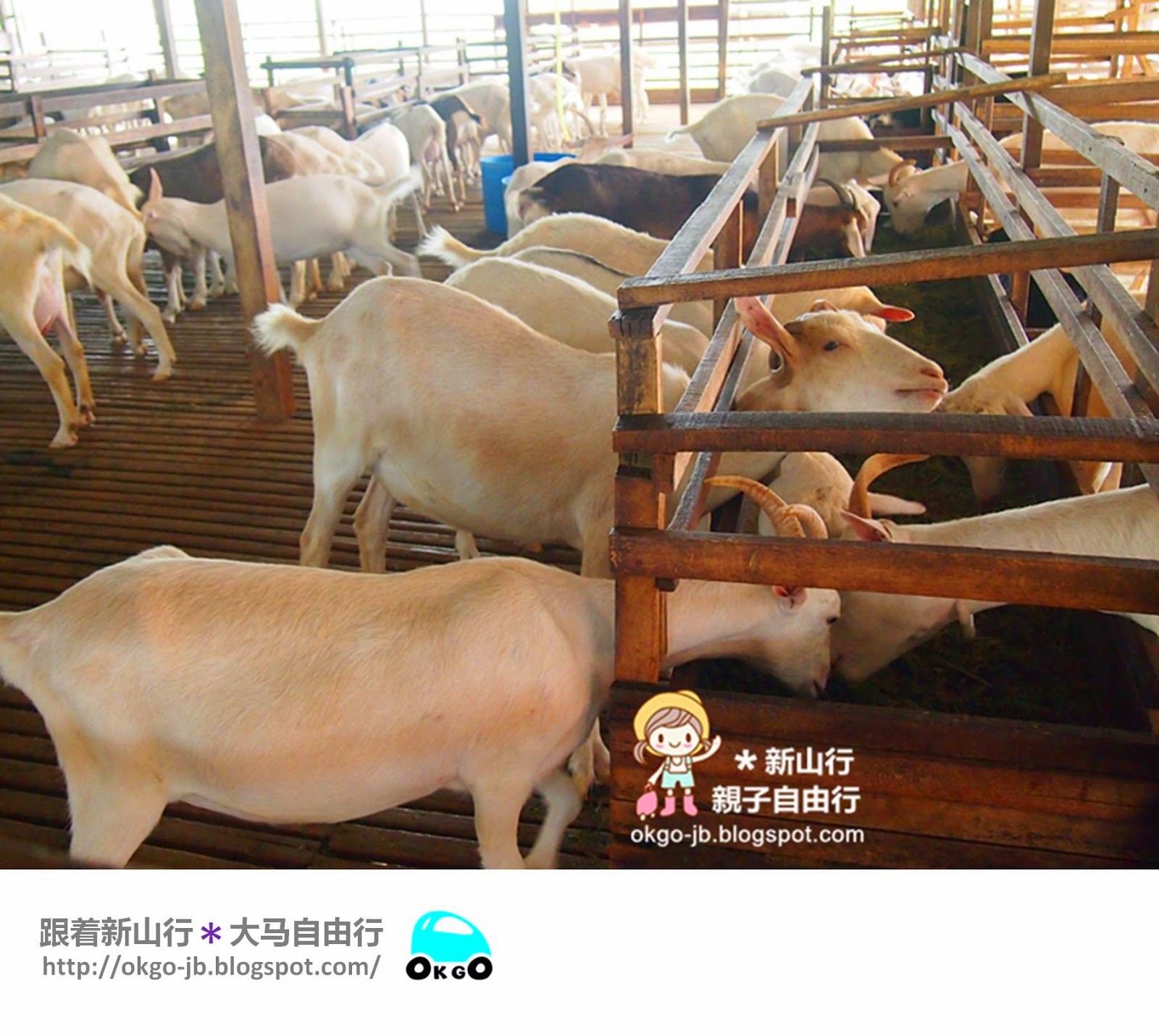 Kluang UK Farm Goat