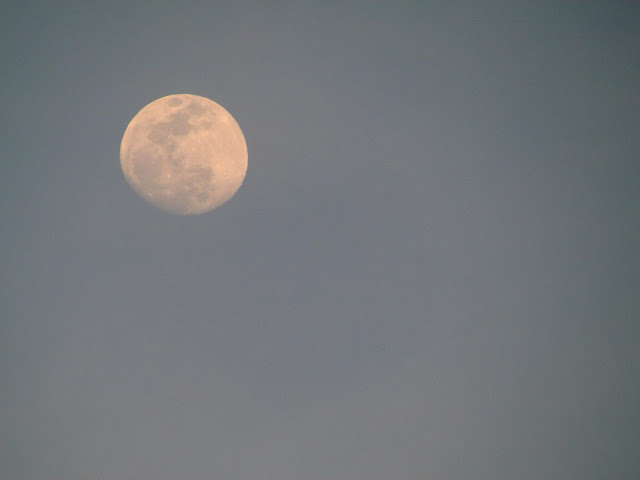 the moon seen during the day