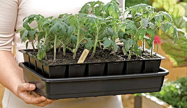 Cafe idly bangalore for Gardening tools in bangalore
