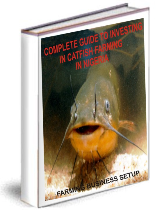Starting A Catfish Farming Business – Step By Step Guide