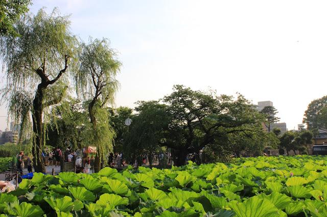 Life in Tokyo | Ueno Park