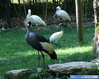 Grue royale - Ibis et Spatule