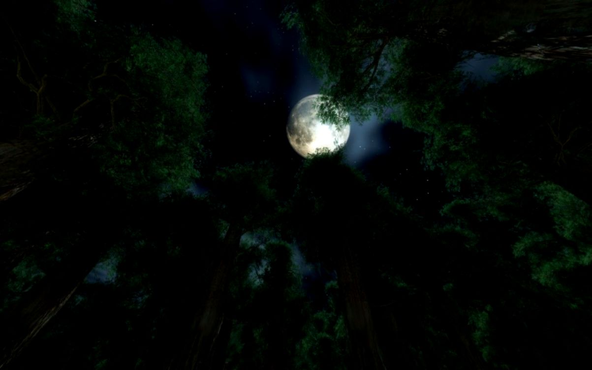 Forest Night Wallpapers High Resolution My Sims 3 Downloads