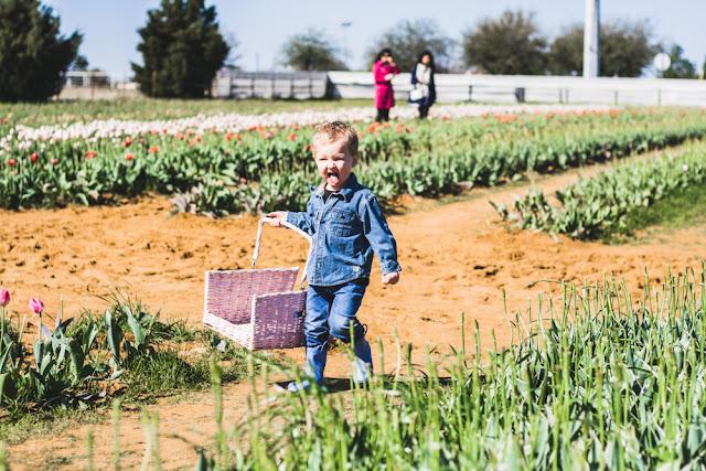 Tulip Farm