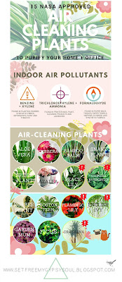 air cleaning plants air purifying houseplants