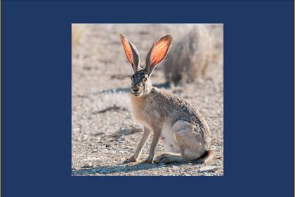 (1) Animalia (Campbell Jilid 3)