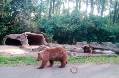 beruang-madu-taman-safari