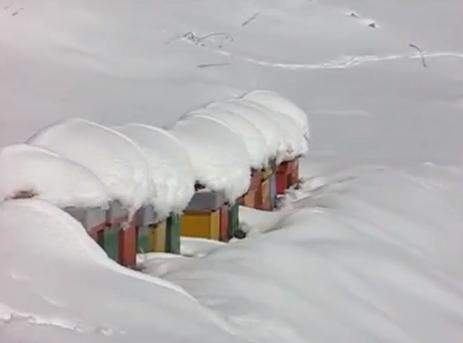 Μελίσσια στα χιόνια video