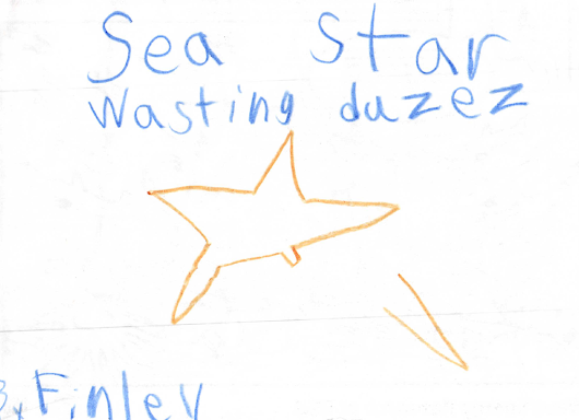 A most excellent summary of sea star wasting disease!