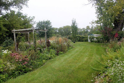 grass and overgrown perennial gardens