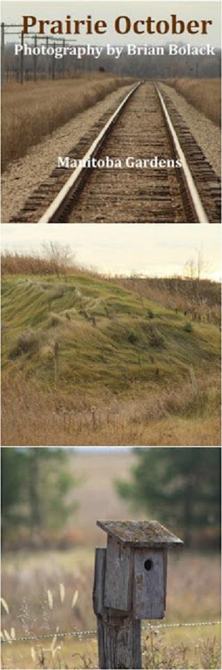 train tracks, grassy hill, bird house