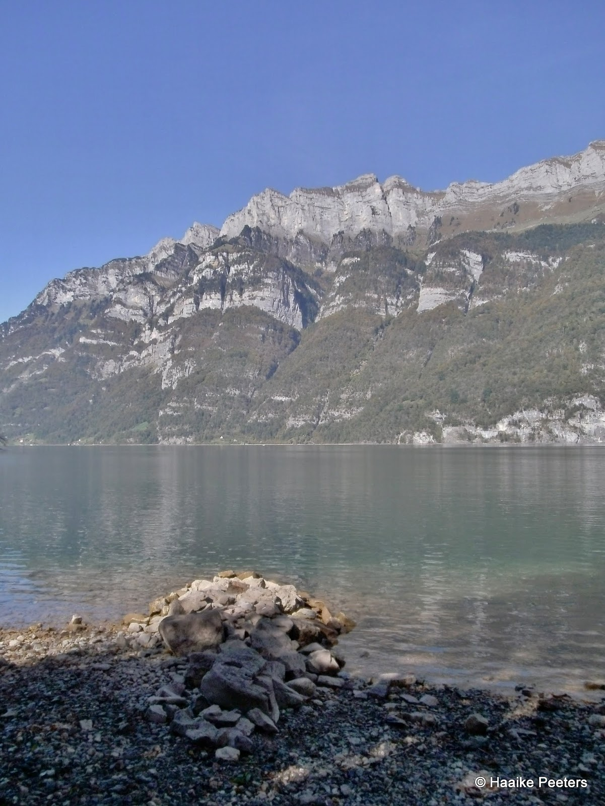 Walensee (Le petit requin)