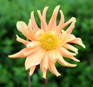 Stunning bloom again