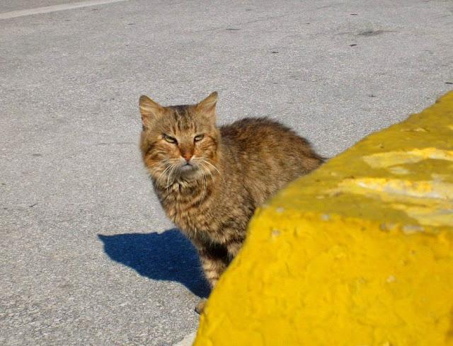 Koty w Maroko. Tanger