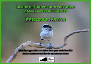 Grupo Ornitológico Zamalla