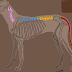 Η σπονδυλική στήλη του σκύλου...