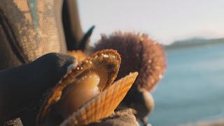 в поисках морских ежей, гребешков и других русских морепродуктов