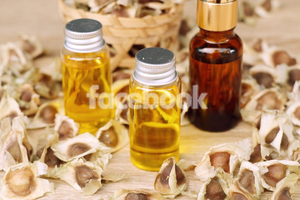 Characteristics of Properties of the Moringa Oil