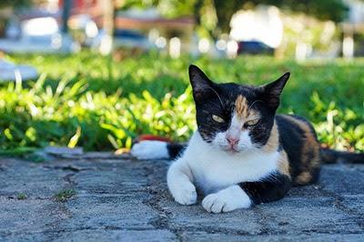 Cat relaxing in the sun