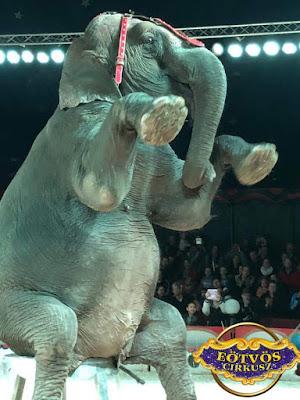 Ezt is tudjas Mosley, az elefánt