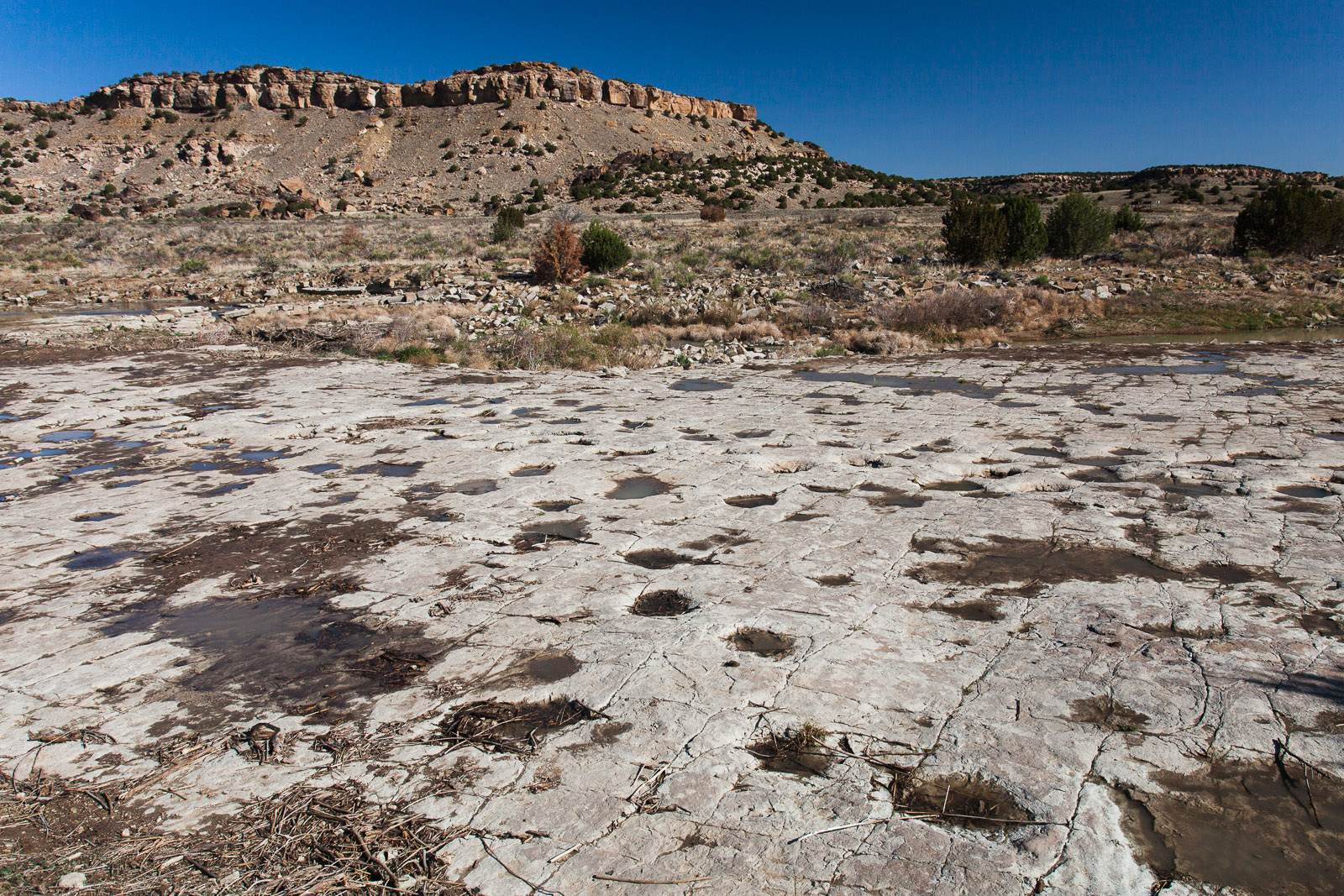 Calling All Paleontologists! 10 Places to Go Fossil Hunting