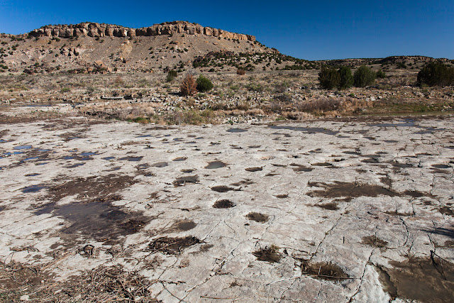 Calling All Paleontologists: 10 Places to Find Fossils in Colorado   CosmosMariners.com