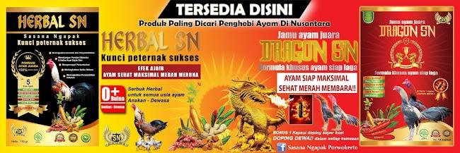 Dragon SN Jamu Tradisional Ayam Bangkok Sebelum Diadu