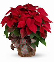 bloomex-poinsettia-basket