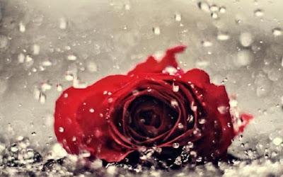 Bunga Setahun Sehujan