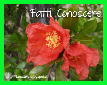 """10 edizione """"Fatti Conoscere"""" su Kreattiva"""