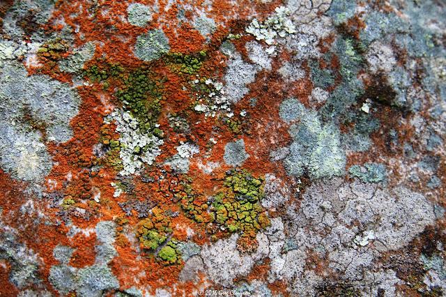 Lichens crustacés, Franchard Cuisinière, Fontainebleau, (C) 2016 Greg Clouzeau