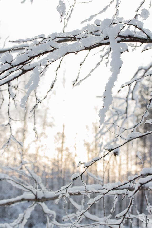 nature, suomen luonto, pakkaspäivä